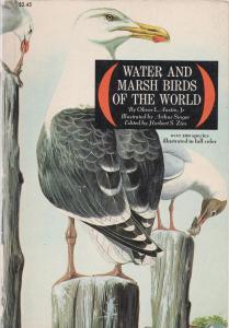water-and-marsh